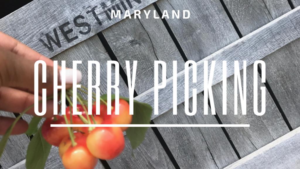 Where To Go Cherry Picking – Maryland